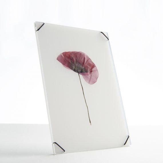 FlowerFrame Medium transparant white